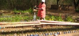 Lutter contre la désertification en Afrique